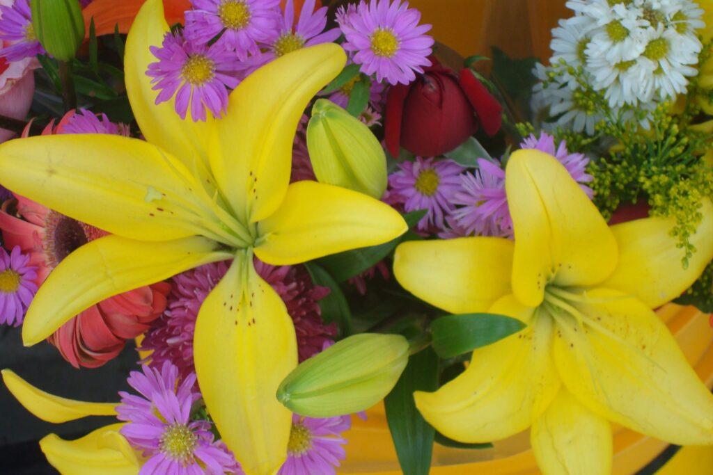 Fleur Mexique Nicole C